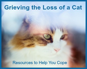 grieving-the-loss-of-a-cat