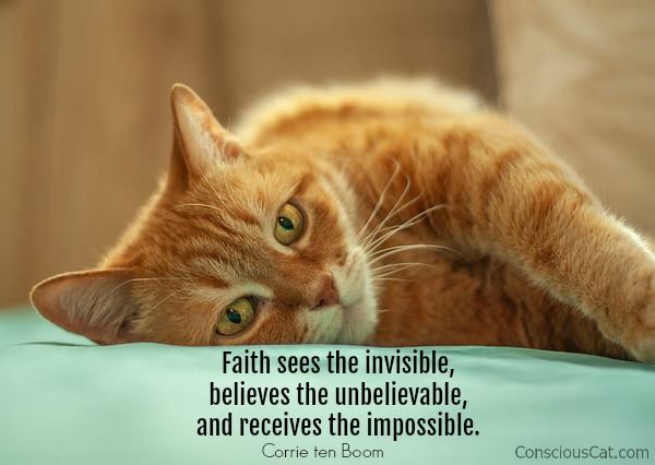 faith-cat-quote