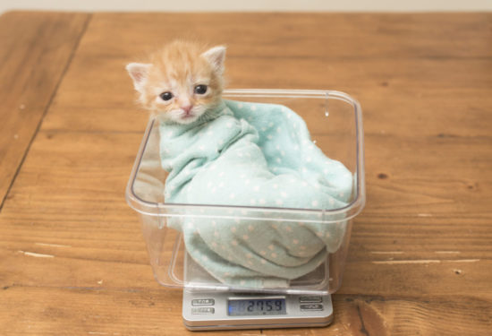 tiny-but-mighty-kitten-scale