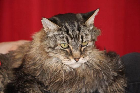 cat-hospice-care