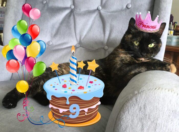 Ruby-birthday-Conscious-Cat