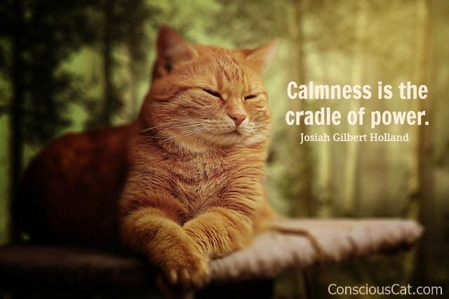 calm-cat-resting