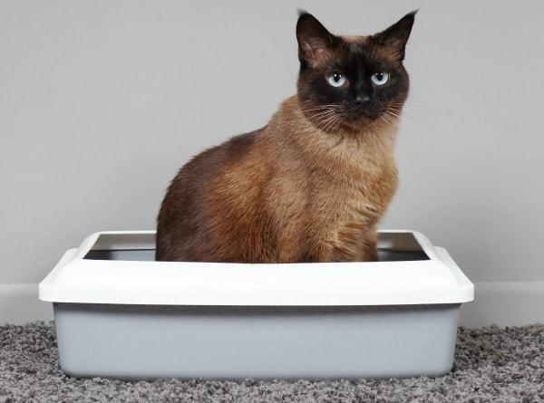 cat kidney failure peeing outside litter box