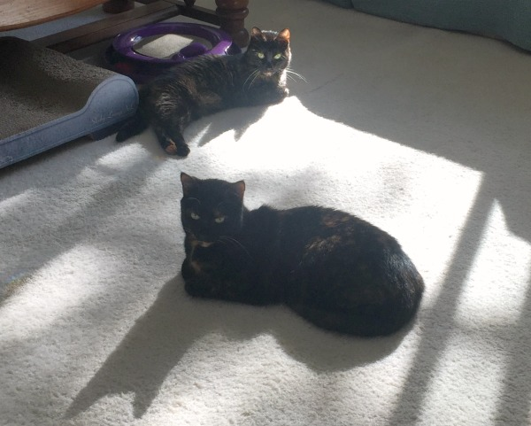 cats-in-the-sun