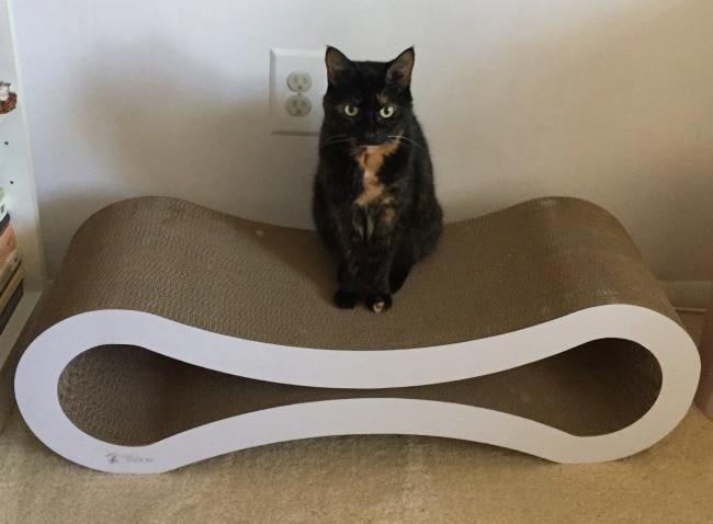 cat-scratch-lounge
