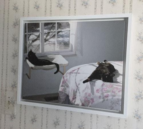 canvas-print-cats