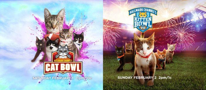 kitten-bowl-cat-bowl
