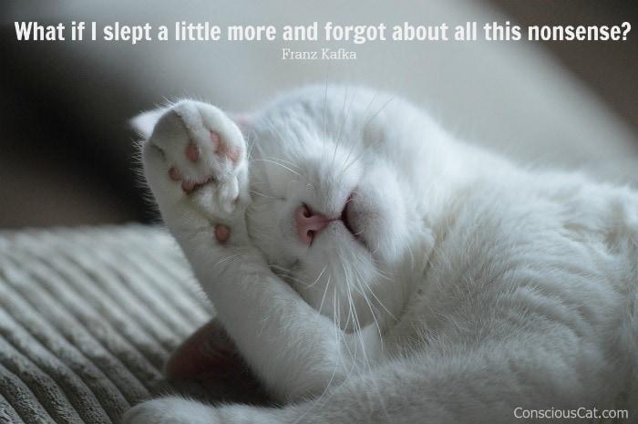 white-cat-sleeping
