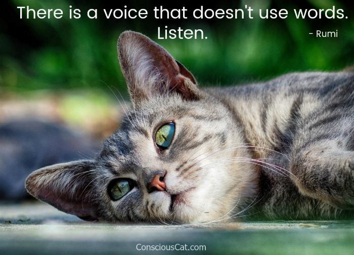 voice-listen-rumi-cat