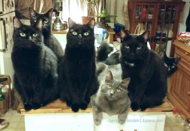 cats-on-kitchen-counter