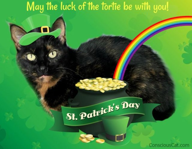 st-patricks-day-cat