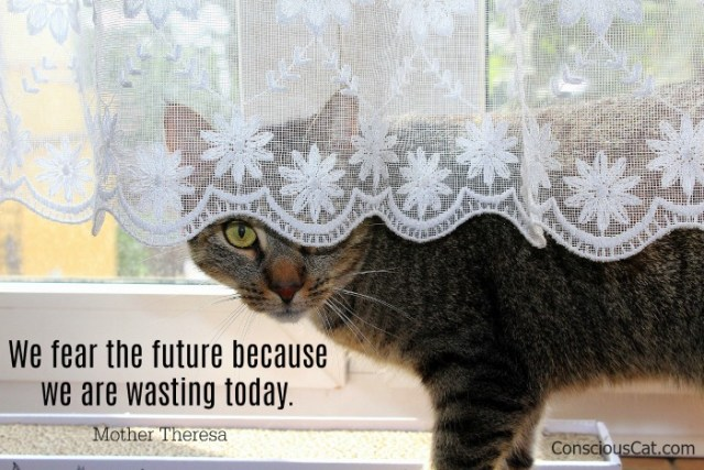 fear-future-waste-today