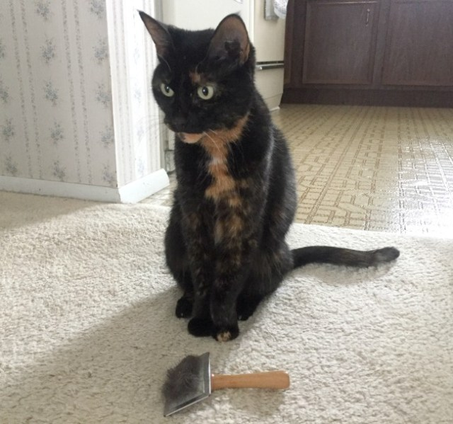 slicker-brush-tortoiseshell-cat