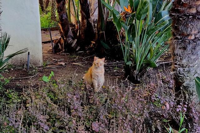 orion-aztec-cats