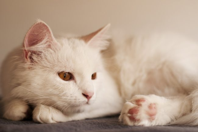cat-dies-during-pandemic