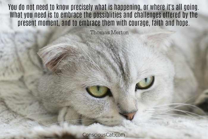 cat-present-moment