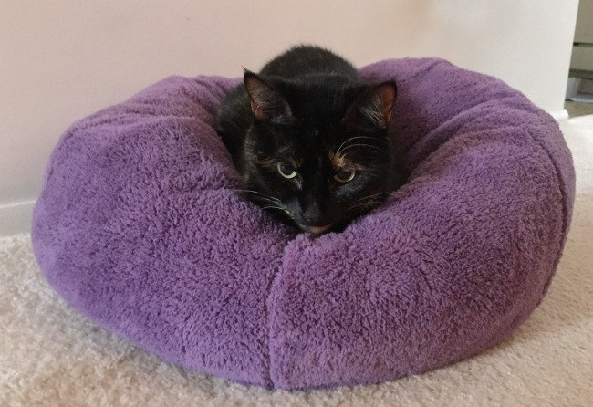 dumpling-cat-bed
