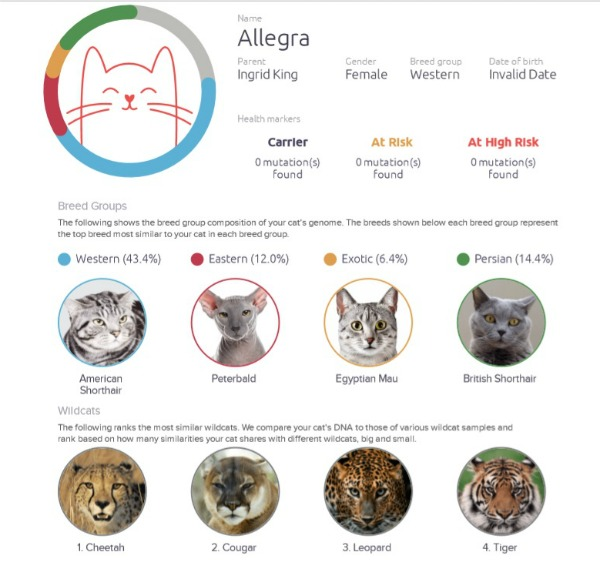 cat-dna-test