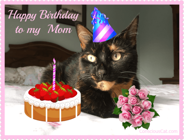 birthday-cat