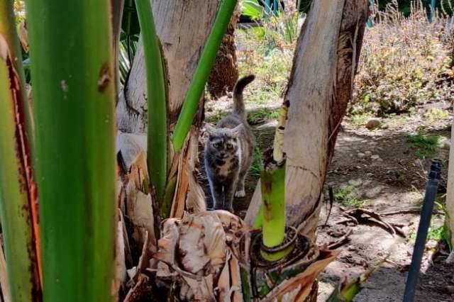 Aztec-cats