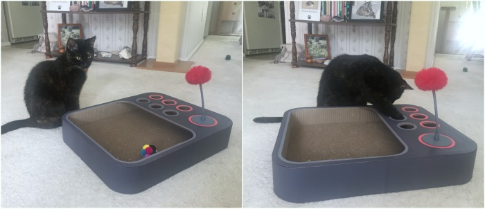 Cheerble-board-game-cats