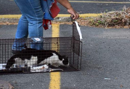 tnr-cat-trap