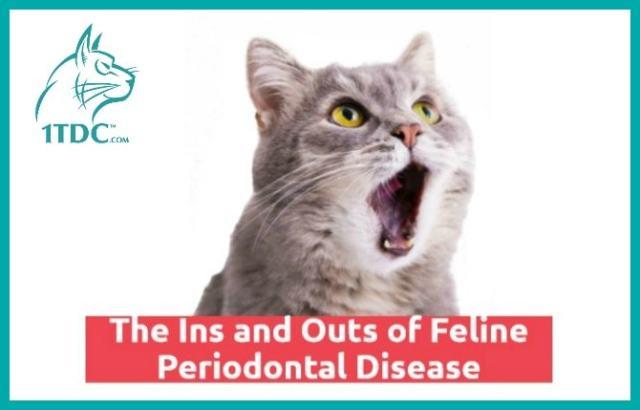 feline-periodontal-disease-guide