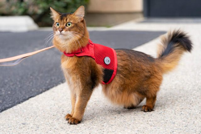 martingale-cat-harness