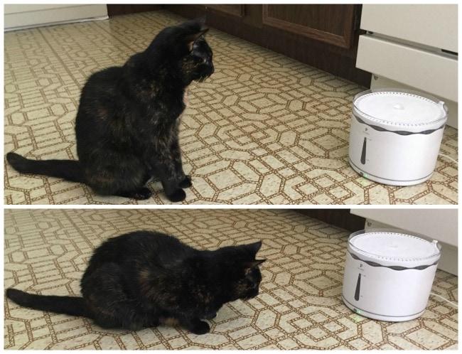 petlibro-cat-fountain
