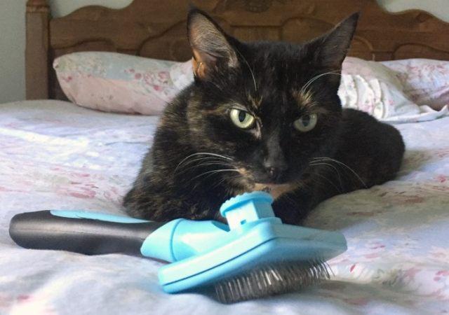 slicker-brush-cat