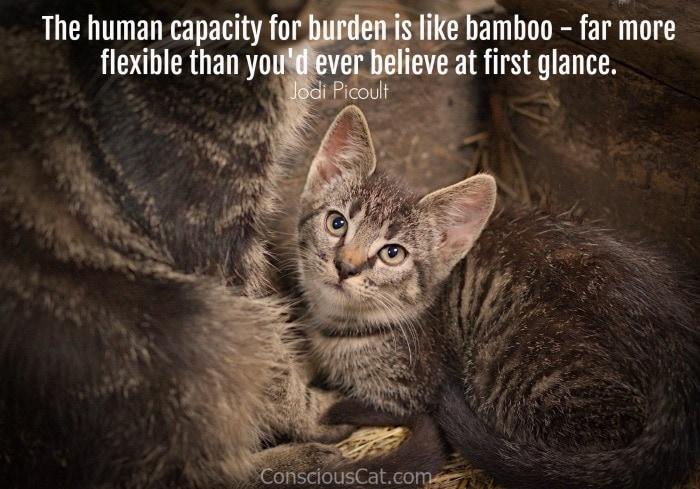kitten-mom-c at