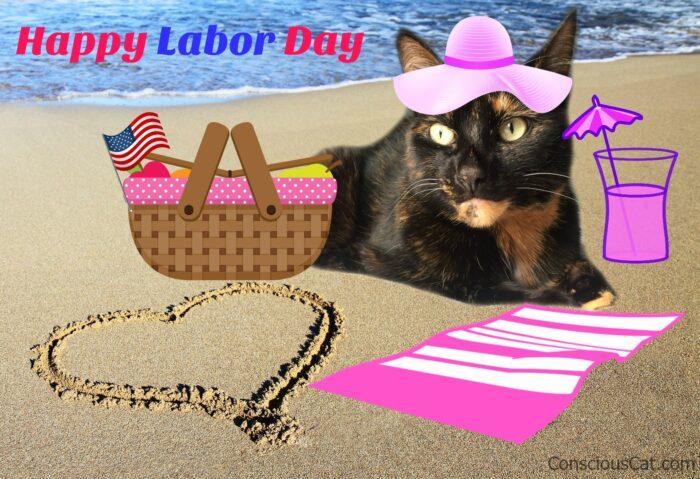 beach-cat-picnic