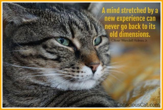 cat-face-smart