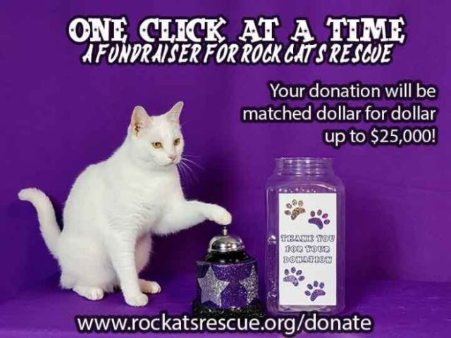 amazing-acro-cats-rock-cats-rescue