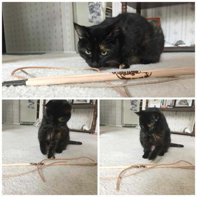 kittywhip