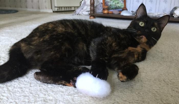 silver-vine-cat-toy