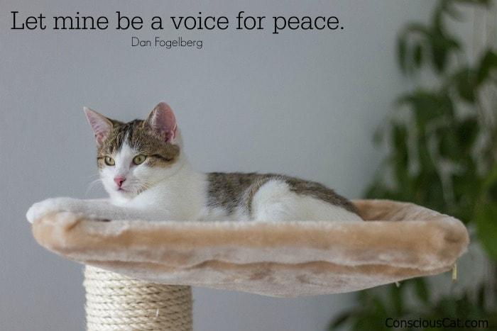cat-resting-peaceful