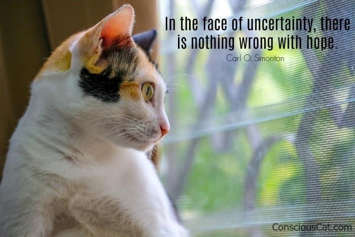 cat-window-uncertainty