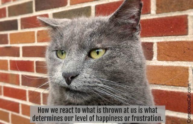 cat-frustration