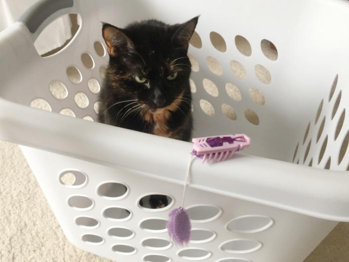 cat-laundry-basket-hexbug