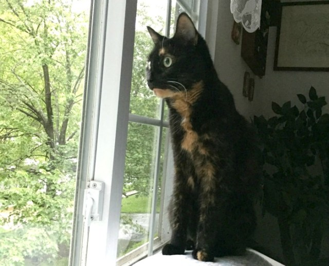 cat-by-window