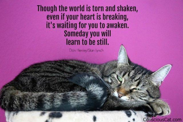 cat-resting-meditating