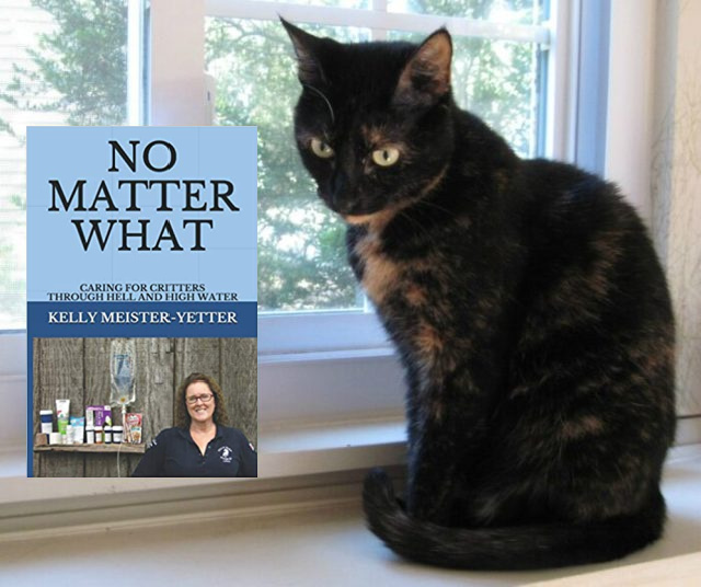 no-matter-what-kelly-meister-yetter