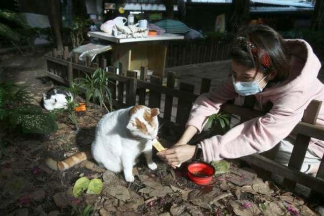 taiwan-cat-cafeteria