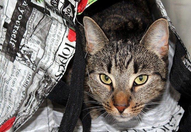 cat-in-bag