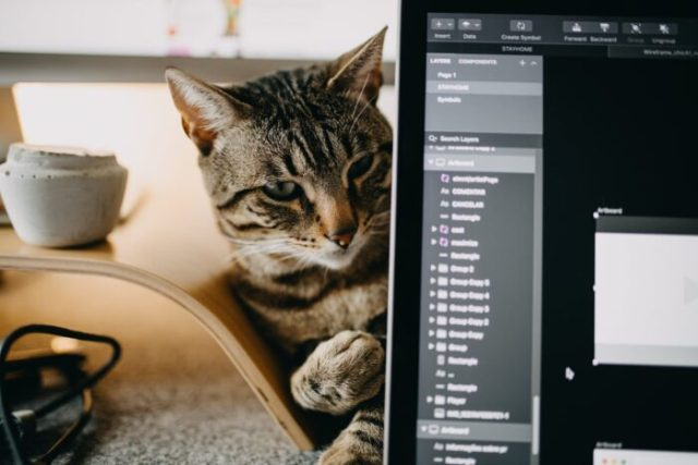 cat-zoom