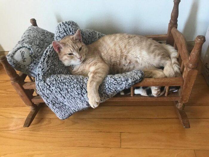 sherpa-cat-blanket