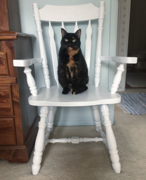white-chair-tortoiseshell-cat