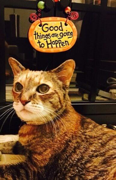 cumin-love-and-above-cat-club