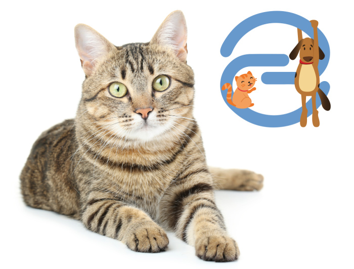 cat-insurance-pet-insurance